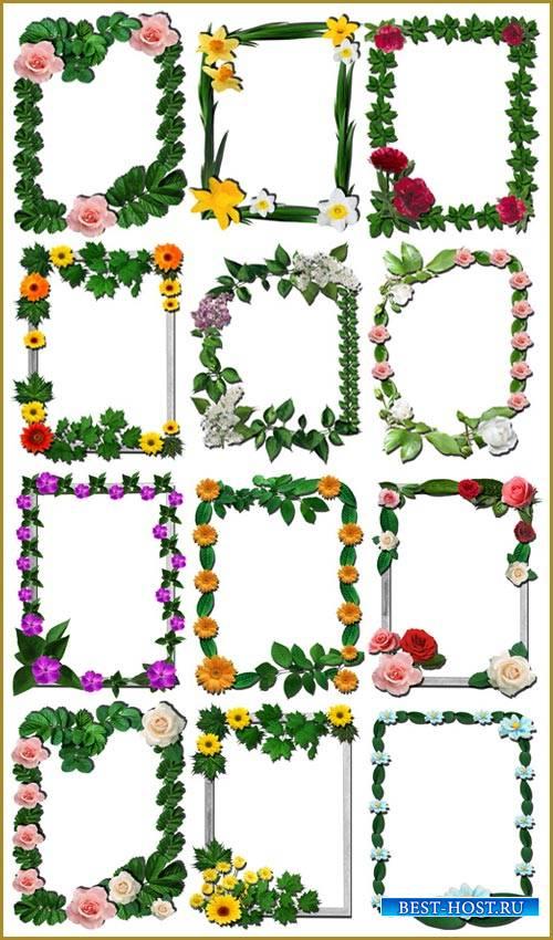 Цветочные рамки вырезы для фотошопа