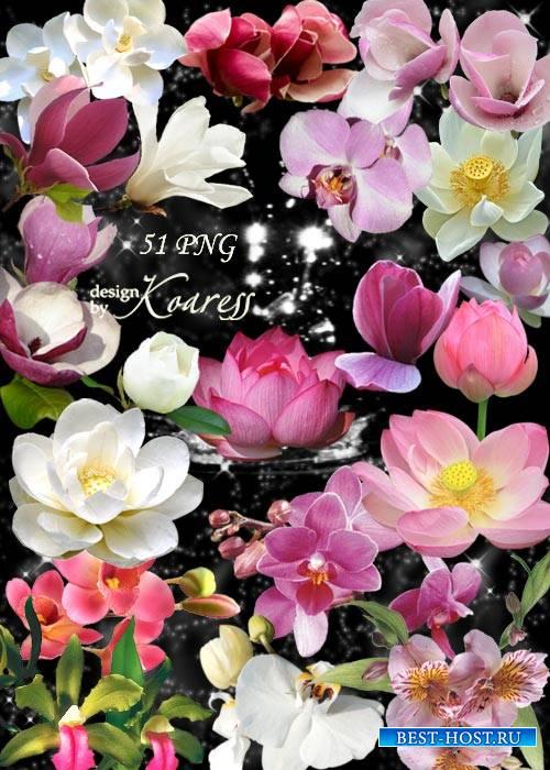 Png клипарт для дизайна с лотосами, водяными лилиями, орхидеями - Экзотичес ...