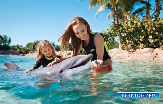 Шаблон  парный - Ручной дельфин