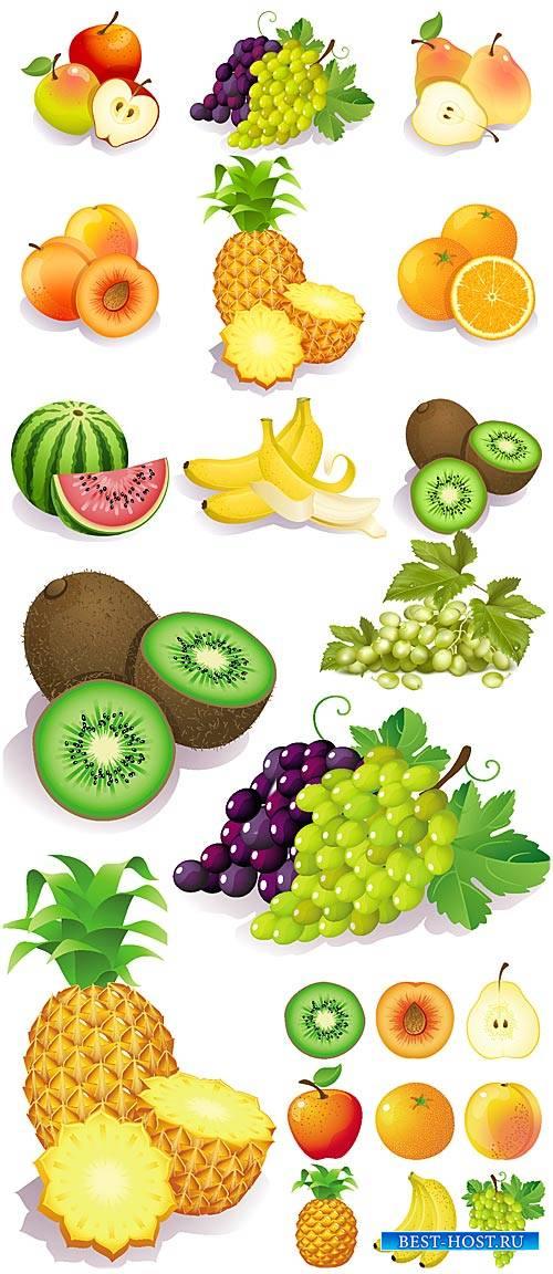 Фрукты в векторе, тропические фрукты / Vector fruit, tropical fruit