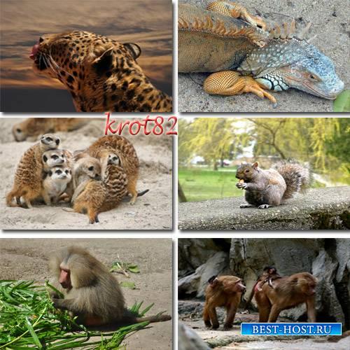 Сборник обоев диких животных для рабочего стола