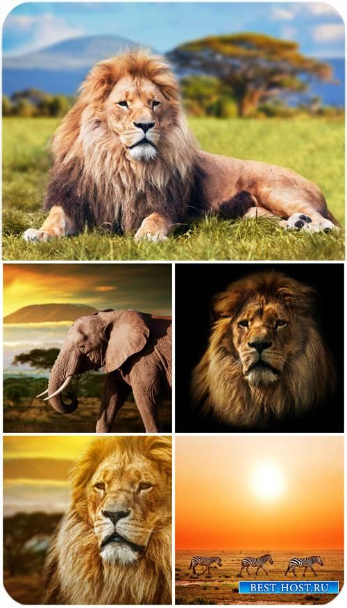 Животные на природе, слон, лев / Animals in nature - stock photos