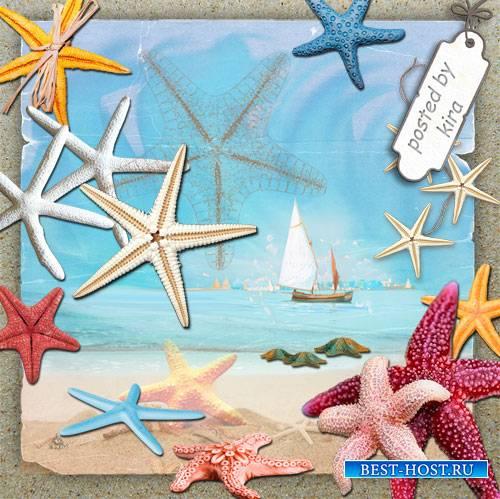 Клипарт  - Морские звезды на прозрачном фоне