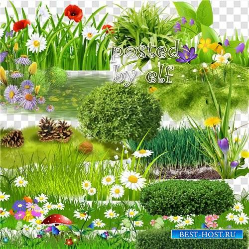 Скрап набор зеленая травка