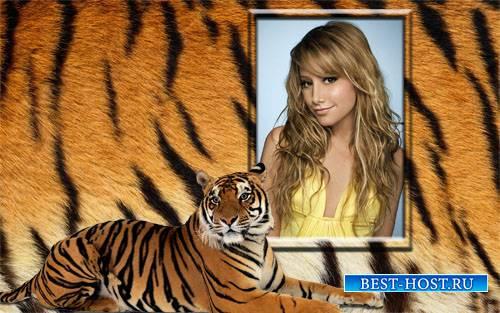 Фоторамка psd - Роскошный тигр