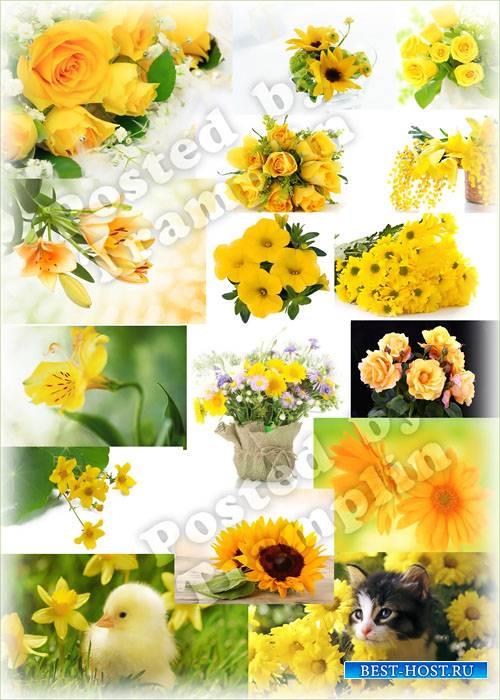Желтые цветы - Цвет солнца и пшеницы