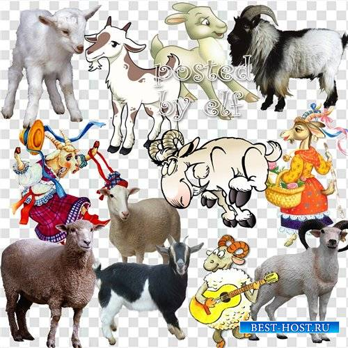 Коза и овца, символ 2015 года  - клипарт png