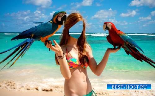 PSD шаблон для девушек - Фото и 2 классных попугая