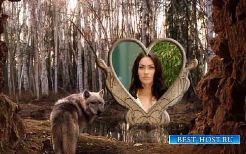 Фоторамка psd - Волк в лесу