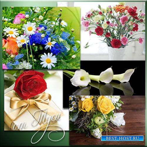 Изящные букеты цветов – дети полей и садов