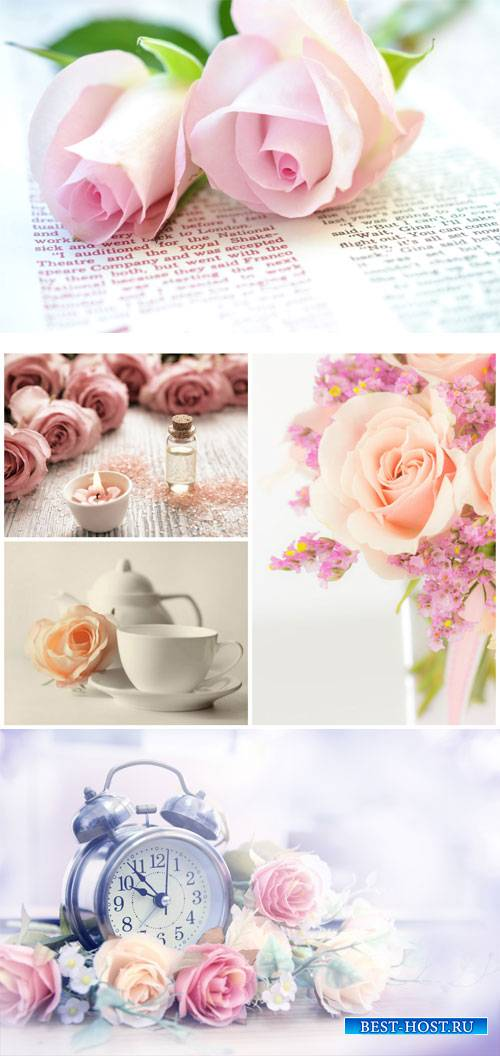 Gentle background with roses - stock photos