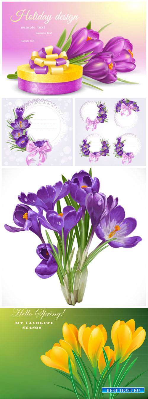 Crocuses, beautiful spring flowers vector
