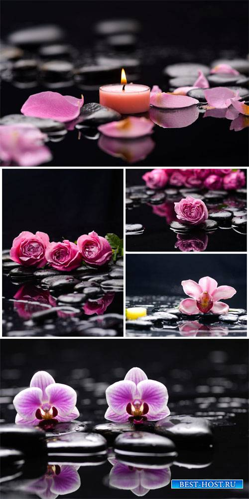 Spa background with roses and orchids - stock photos