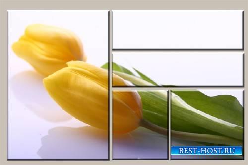 Модульная картина из 5 частей - Тюльпан