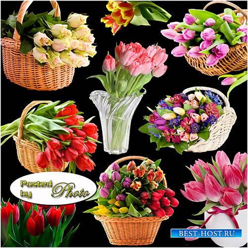 Клипарт на прозрачном фоне - Самые красивые тюльпаны