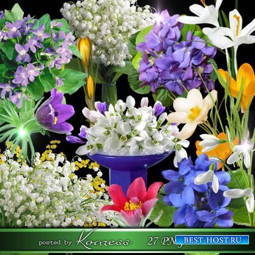 Весенние цветы - фиалки, подснежники, ландыши, крокусы, сон-трава на прозра ...