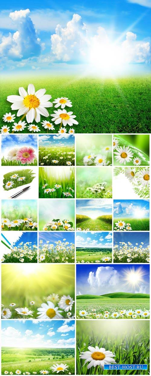 Daisies, nature, landscapes - stock photos