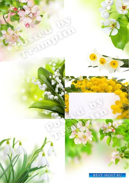 Весенние цветочные фоны Set 2