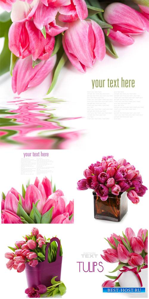 Tulips, flowers on a white background - Stock photo