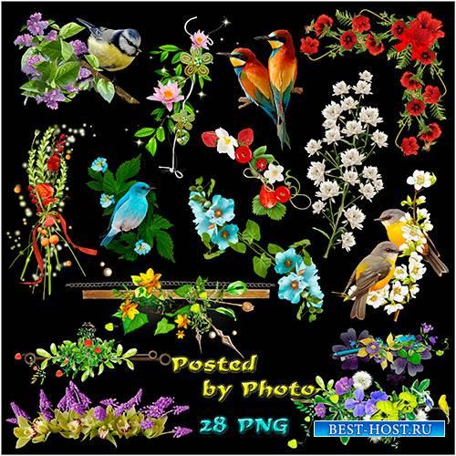Клипарт на прозрачном фоне - Цветы, разделители, птицы