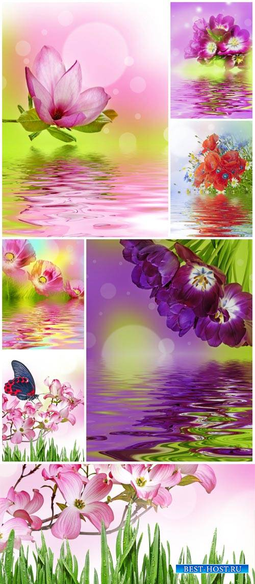 Beautiful flowers and water - stock photos