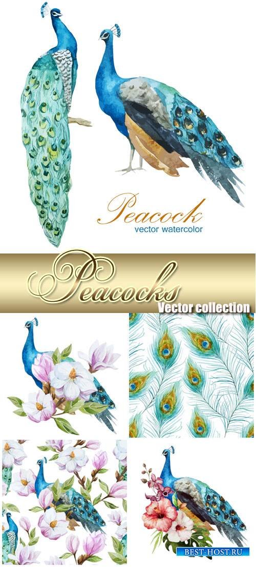 Peacocks, vector backgrounds