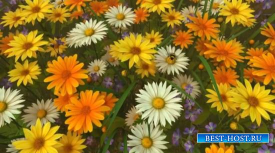 футажи красивые цветы цветут