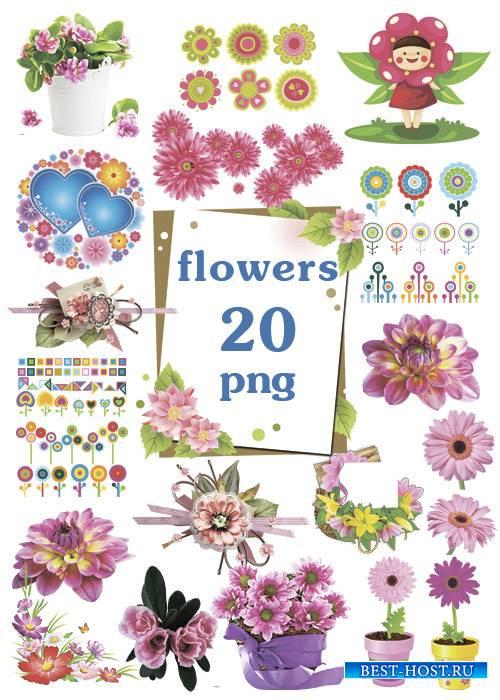 Яркие и красивые цветы для оформления в PNG