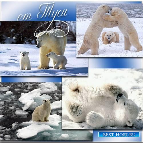 Мишки снежные, веселые и нежные - Клипарт