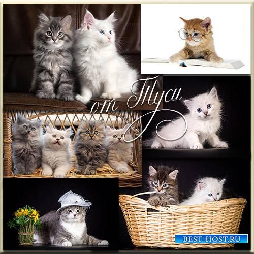 Нереальной красоты симпатичные коты - Клипарт