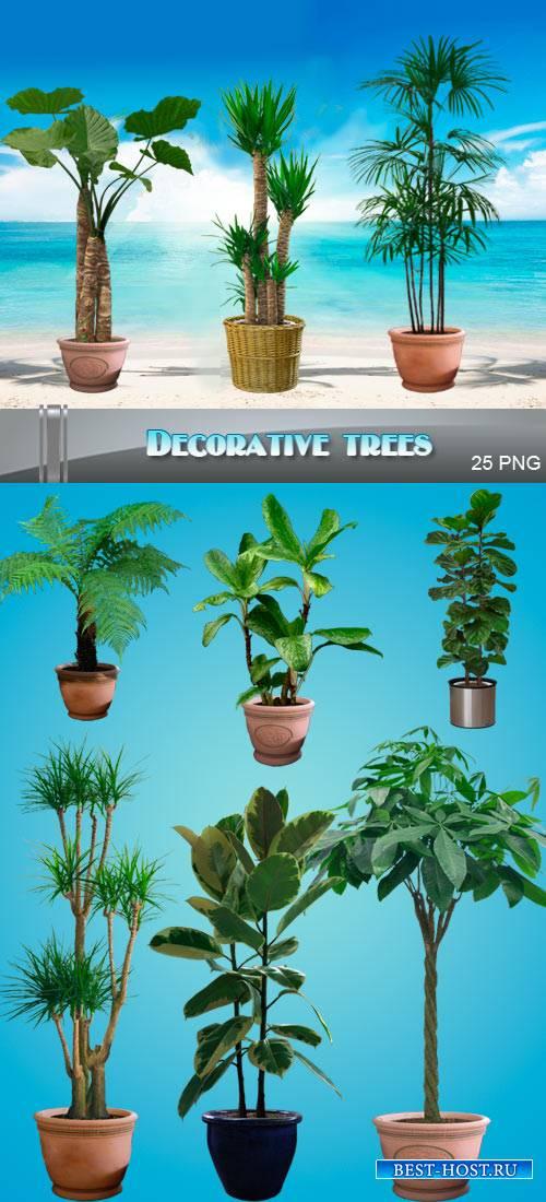 Декоративные пальмы и деревья