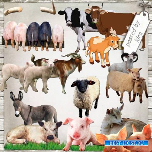 Клипарт  - Домашние животные на прозрачном фоне