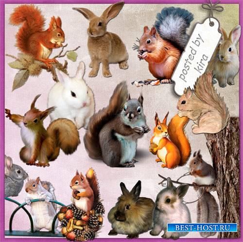 Клипарт  - Белки и зайцы на прозрачном фоне