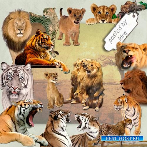Клипарт для творчества  - Тигры, львы и другие кошачьи