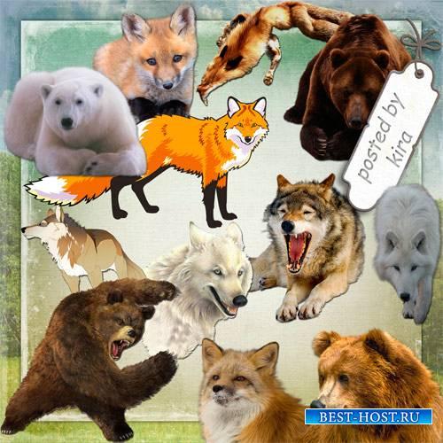 Клипарт для творчества - Медведи, лисы и волки