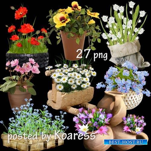 Клипарт на прозрачном фоне - Садовые и комнатные цветы в корзинах, вазонах, ...