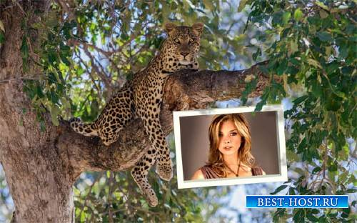 Рамка для фото - Дикий леопард на ветке