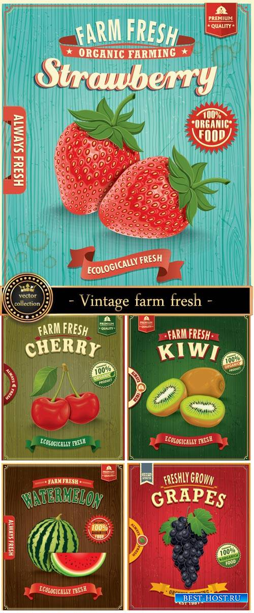 Vintage label vector, strawberries, watermelon, grapes, kiwi