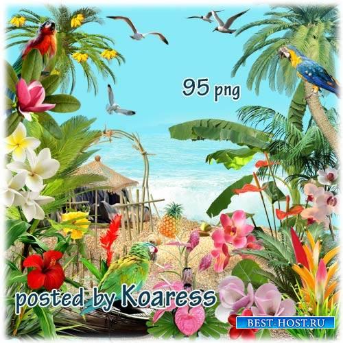 Клипарт без фона для дизайна с тропическими растениями и птицами - Остров в ...