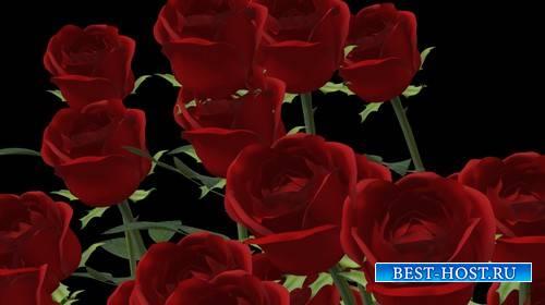 Футаж с вращающимися розами