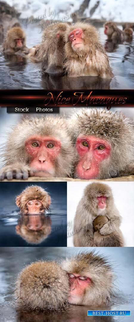 Симпатичные Макаки в горячих источниках Японии – Stock photo