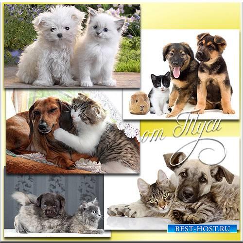 Клипарт - Характеры разные, но отношения прекрасные - Собаки и коты