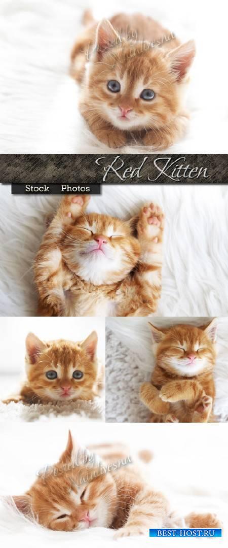 Симпатичный рыжий котенок