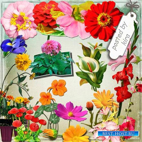 Клипарт без фона - Георгины, гладиолусы, пионы и другие садовые цветы