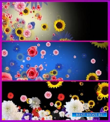 Футажи - переходы с цветами