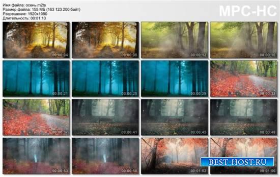 футажи Осень в парку