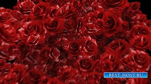 Футаж - переход с розами