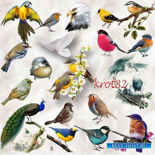 Клипарт для фотошопа – Летящие и сидящие на ветках птицы