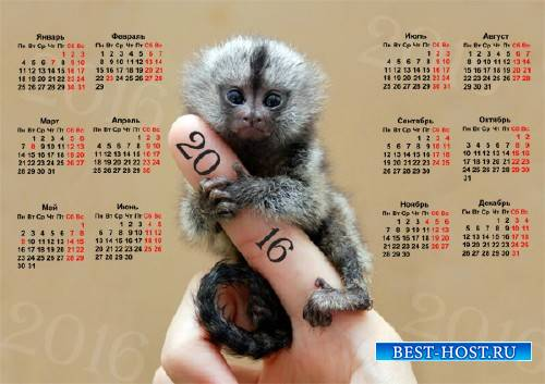 Настенный календарь - Маленькая обезьянка