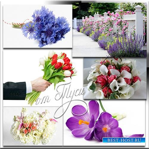 Клипарт - Прекрасные цветы хранят историю любви